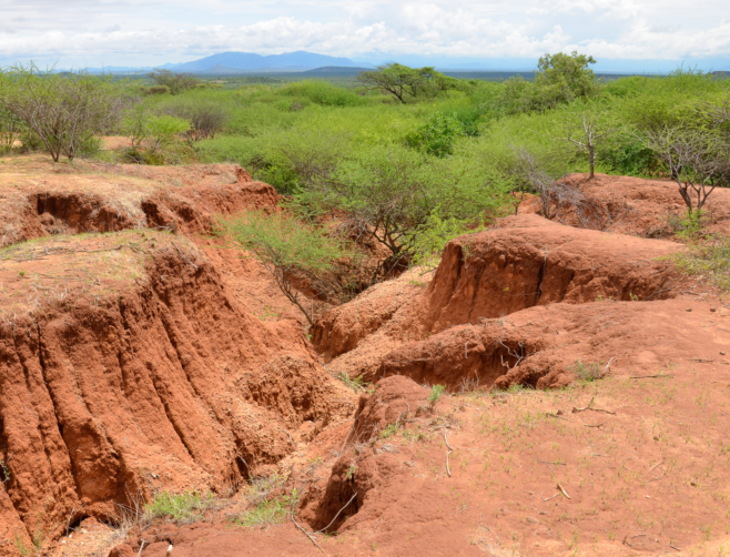 3.Gully formation and loss of perennial grasses due to overgrazing in northern Kenya – not too many livestock but poor management due to a breakdown of traditional grazing systems.