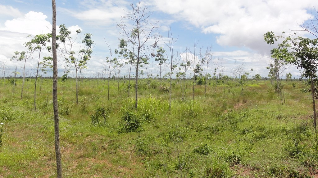Failed rubber plantation in southern Laos. Photo © Jefferson M Fox/East-West Centre