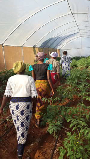 Women from the Sikika Self Help Group in their Greenhouse in Makueni County, Kenya. Photo by Elsabijn Koelman/ICRAF