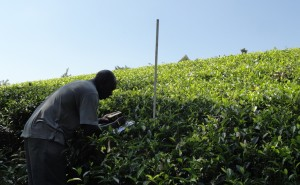 A research technician records GPS coordinates of a sampling point on a tea farm withing the study area of the MICCA project area in Kaptumo, Kenya. Photo ICRAF
