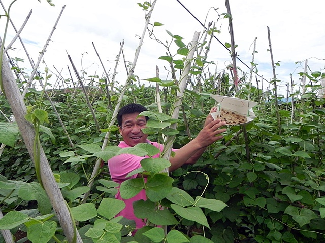 Mr Hoang Van Chau from Fruit and Vegetable Research Institute demonstrating the benefits of pheromone traps in an off-season vegetable trial in Mai Tien village. Photo: World Agroforestry Centre/CGIAR Research Program on Integrated Systems for the Humid Tropics/Mai Thanh Tu