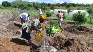 Nursery-Fruit Tree Potfolio Establishment at Satellite Nursery-Machakos