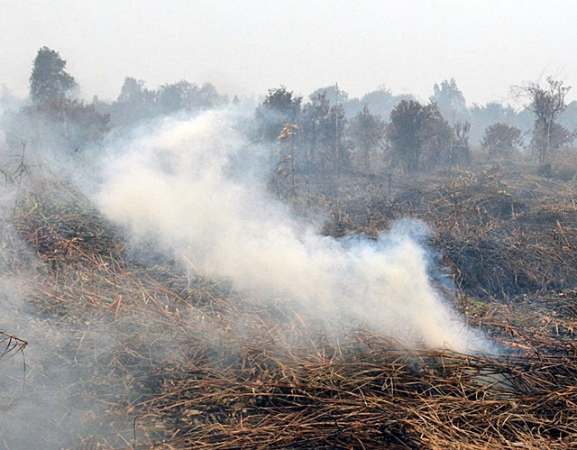 Smoke from peat fires burning on thousands of hectares blankets entire regions. Photo: World Agroforestry Centre