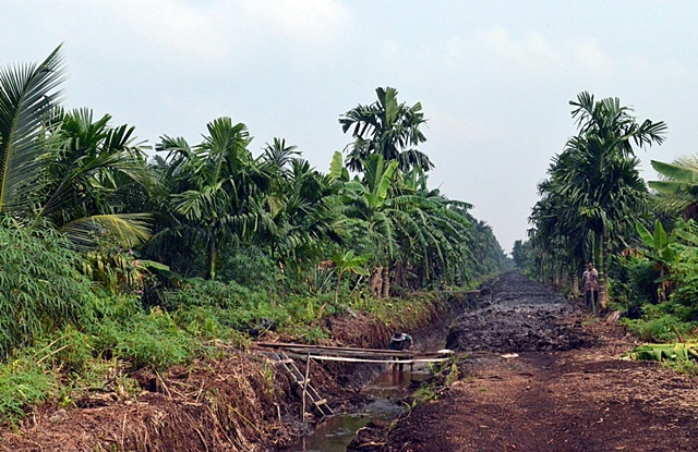 Conversion of peat-swamp forests to oil-palm monocultures underlies efforts to reduce haze. Photo: World Agroforestry Centre