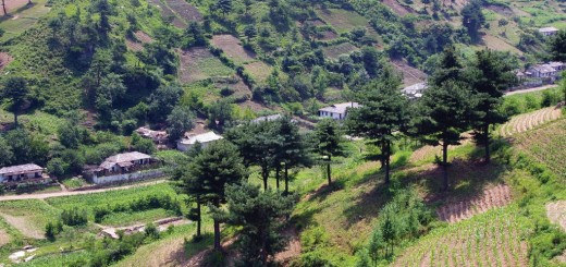 Restored and restoring hillsides in north Hwuanghae province