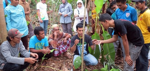 Expert farmers showing fellow farmers how to do vegetative propagation. Photo: World Agroforestry Centre