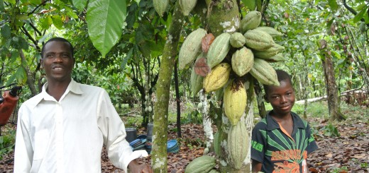 Farmer Ahmadou Ouattara with his son: 21 pods are clearly visible on this cocoa tree, which has benefitted from good agricultural practices promoted by the BMZ-funded project - Innovations for sustainable cocoa production and biodiversity conservation in the Hana River region in Côte d'Ivoire. About half of cocoa farmers earn less than the international poverty line of $1.25/pp/day.