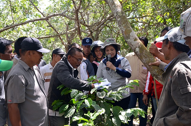 Retno Hulupi, coffee expert from the Indonesian Coffee and Cacao Research Institute, training as part of an agroforestry farmers' field school in Mulia Jaya, Southeast Sulawesi. Photo: World Agroforestry Centre/Enggar Paramita