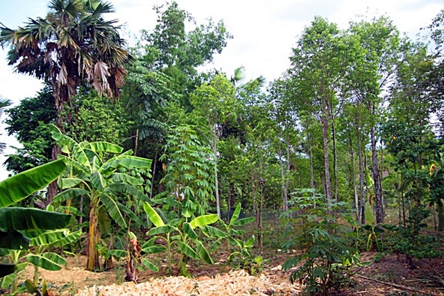 a typical home garden at the study site ho ho sub watershed central - Trees For Home Garden