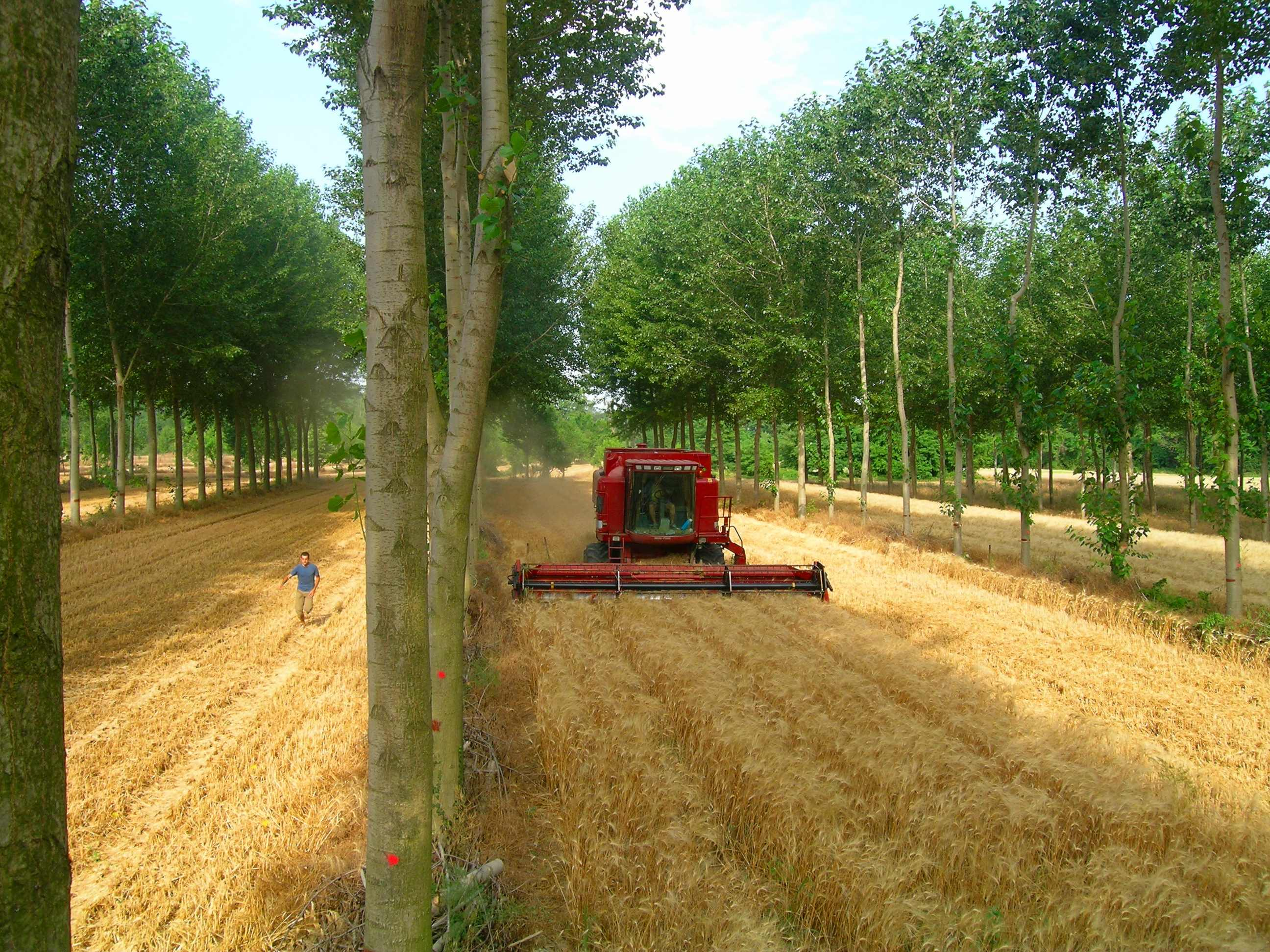 Agriculture Jobs in Bangladesh