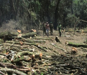 Deforestation and forest degradation from an unregulated wood energy sector. Photo courtesy of Miyuki Iiyama/ICRAF