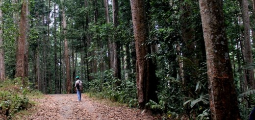 Gunung Walat forest. Photo: World Agroforestry Centre/Paige McClanahan