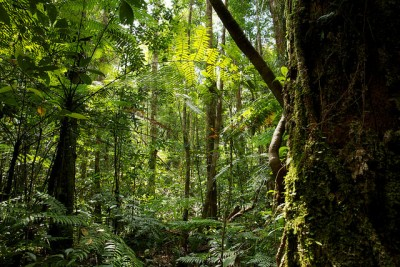 Considerations for successful forest restoration in a changing climate
