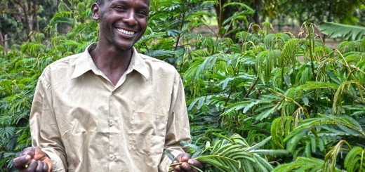 David Kenduywo at his farm in Kembu, Bomet County in Kenya. He grows fodder trees, shrubs and grass for his dairy cattle. ICRAF/Sherry Odeyo