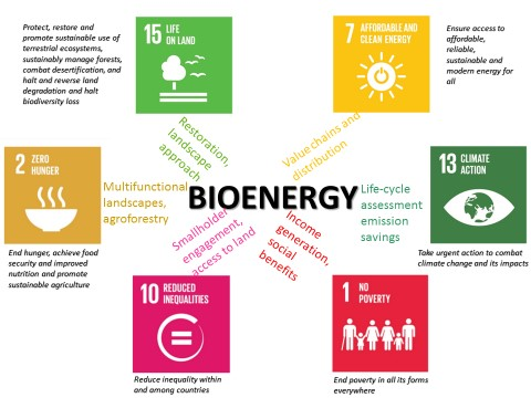 Bioenergy can contribute to more than one of the Sustainable Development Goals. Source: World Agroforestry Centre/Sonya Dewi
