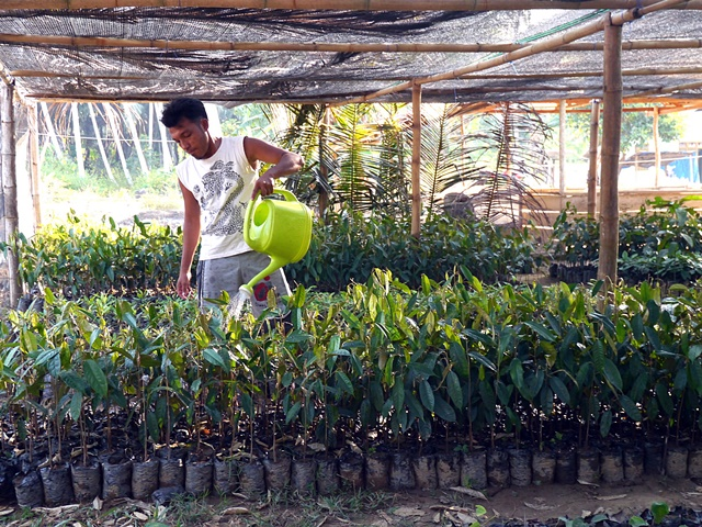 Mr Ali watering his seedlings. Photo: World Agroforestry Centre/Amy Lumban Gaol