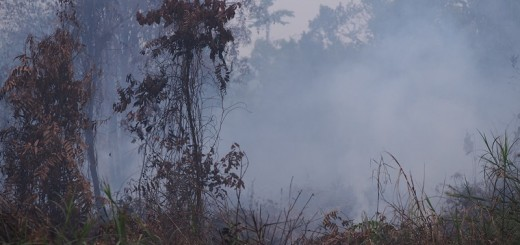 Burning peat forest, Sumatra. Photo: World Agroforestry Centre/Robert Finlayson