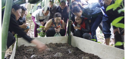Mr. Duong Van Tham (rightmost participant) and women interested in earthworms. Even the women and elderly could tend to the worms, making it an inclusive practice. Photo: ICRAF/Le Van Hai