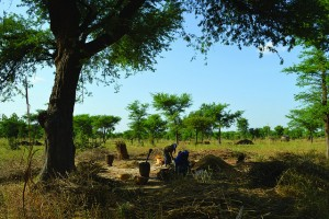 Parklands in Niger. By increasing farmers' incomes, agroforestry can help farmers adapt to climate change. Photo/ICRAF