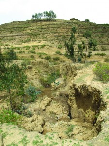 Massive erosion in Ethiopia caused by poor farming practices and tree clearance. Photo/ICRAF