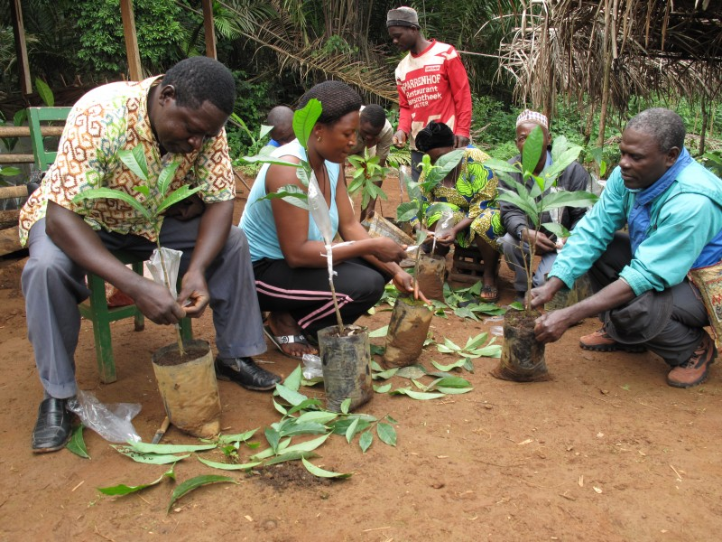 Immense benefits from agroforestry in rural Cameroon