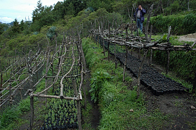 A tree nursery for forest landscape restoration in Canatzaj, Guatemala. In 2014, Guatemala committed to restore 1.2 million ha of degraded and deforested land as a contribution to the Bonn Challenge. Photo: IUCN/Intu Boedhihartono