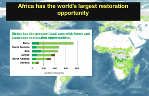 Africa has the world's largest restoration opportunity.