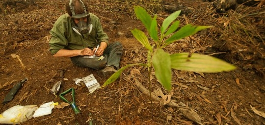 A CIFOR scientist take soil samples in a recently burned area outside Palangkaraya, Indonesia. Photo Credit: Aulia Erlangga/ CIFOR