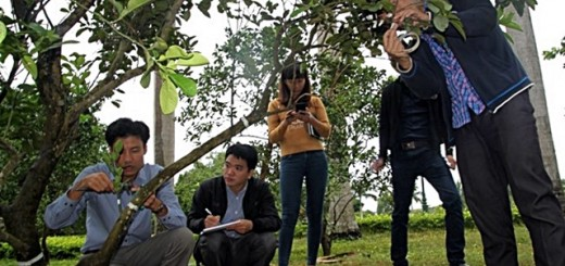 The participants were divided into two groups who collected Fractal Branching Analysis field data from pamelo trees on the NOMAFSI campus. Photo: World Agroforestry Centre/Rachmat Mulia