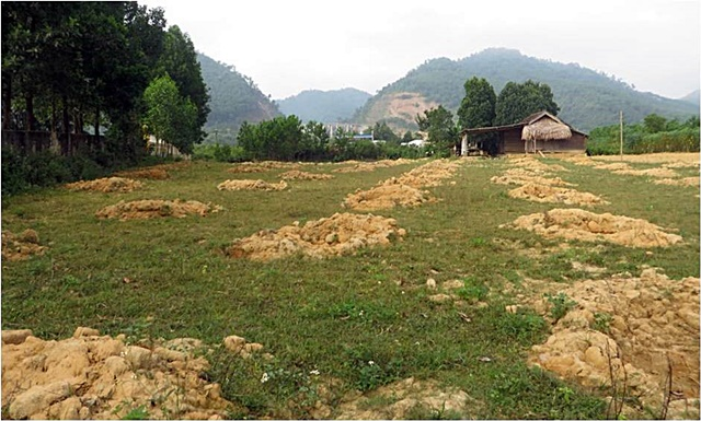 A typical poor quality homegarden in the downstream commune of Ho Ho watershed in Quang Binh Province, where enrichment with fruit trees was implemented. Photo: World Agroforestry Centre/Doan Thi Luyen