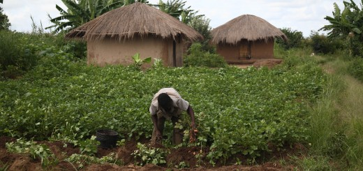 Smallholder farmers are particularly vulnerable to the impacts of climate change. Photo: ICRAF.