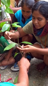 Farmers learning grafting techniques, eastern Sumba. Photo: World Agroforestry Centre/Robert Finlayson