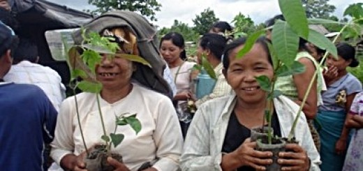 Myanmar farmers with tree seedlings. Photo: Kyaw Kyaw Lin