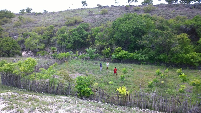 Researchers and farmers examining a agroforestry demonstration trial in eastern Sumba. Photo: World Agroforestry Centre/Robert Finlayson