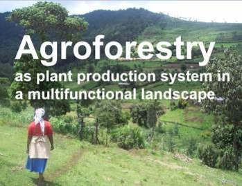 Agroforestry. Source: World Agroforestry Centre/Meine van Noordwijk