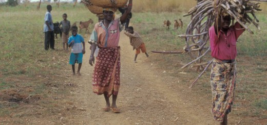 fuelwood Mozambique_FAO