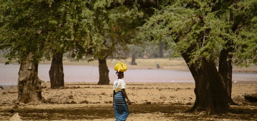 trees&groundwater burkina faso_CIFOR