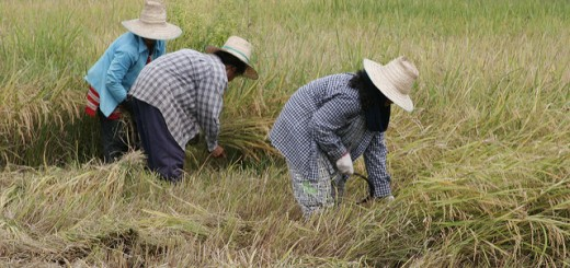 Photo: Hans Evers / FlickR (title farming Thailand)