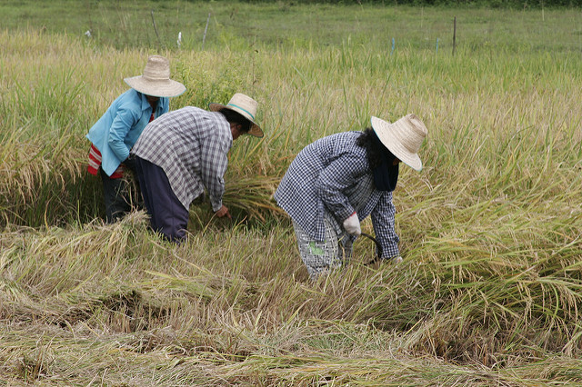 Are women and men equal in agriculture in Thailand?