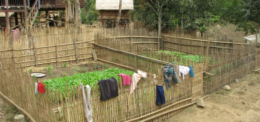 homegarden Laos