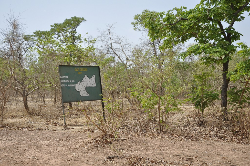 Cassou Forest, Burkina Faso. One of the community managed forests in the country. Photo: Susan Onyango/ICRAF