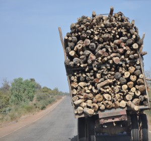 Firewood being transported from Cassou Forest to Ouagadougou in Burkina Faso. Wood fuel exploitation is a major driver of deforestation and forest degradation in the country. Photo: Cheikh Mbow/ICRAF