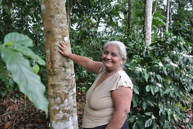 Agroforestry leads as investors and governments support land restoration in Latin America