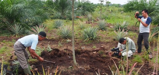 Videoing jelutung management in Jambi. Photo: World Agroforestry Centre/Robert Finlayson