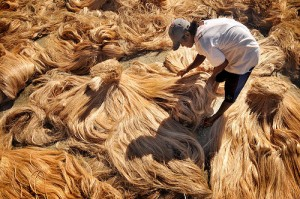 abaca drying