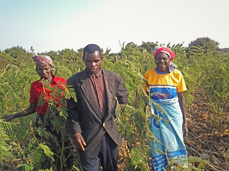 Smallholder farmers in Malawi are growing fertilizer trees on their farms to improve food production