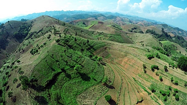 Agroforests expanding across landscapes in Northwest Viet Nam