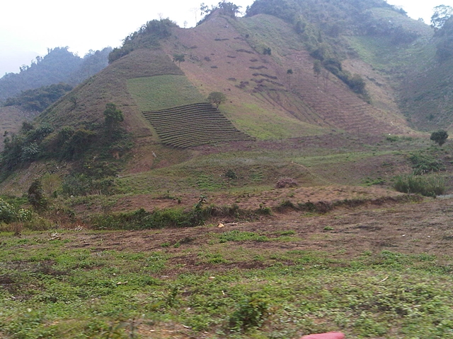 Monocultural cropping and degraded land. Photo: World Agroforestry Centre/Robert Finlayson