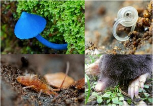 Soil biodiversity suports all life on earth. Photos courtesy of Global Soil Biodiversity Atlas