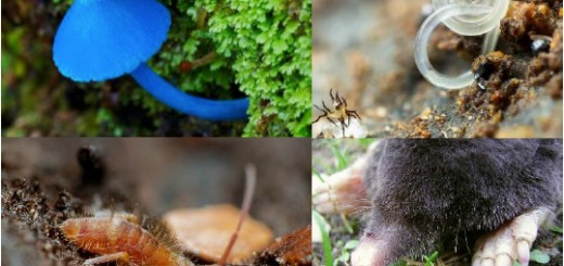 Soil biodiversity suports all life on earth. Photo courtesy of EU-JRC